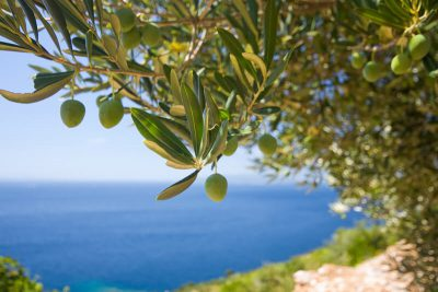 Olive oil, Gastronomy, Greece