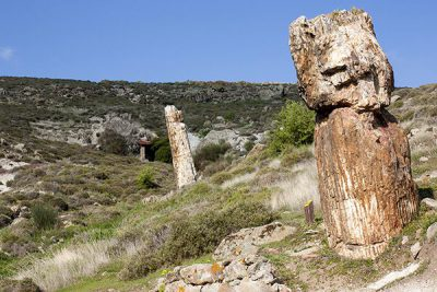 Petrified-Forest-of-Lesvos-Lesvos-North-Aegean-Islands-Greece